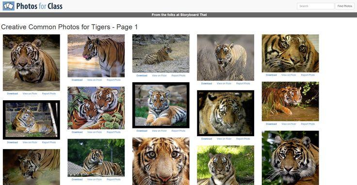 Photos for Class is a great tool to make searching for photos to be used by students online an easy and painless process. It is difficult for Primary age students to correctly attribute photos they may use in projects or understand the reasons for doing it in the first place. Photos for Class finds Creative Commons photos from Flickr's database. Once you see the photo you want, you can download it. Your downloaded photo come with the attribution embedded at the bottom of the photo. Below is…