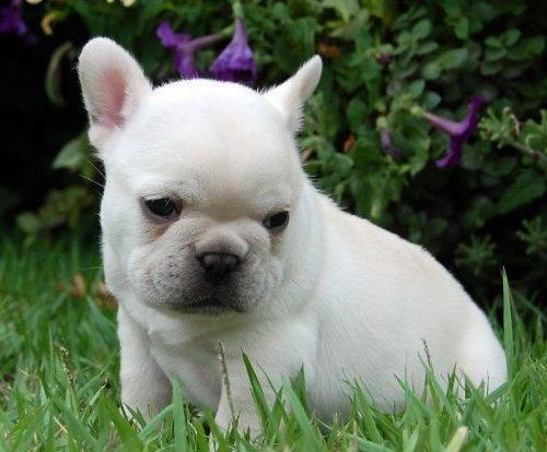 The 10 priciest pets at the vet http://yhoo.it/J5ufJK