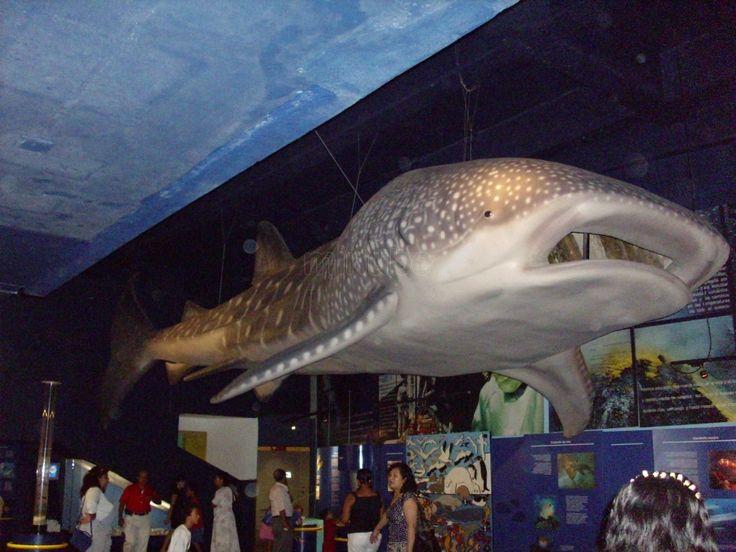 Fotos Del Puerto De Veracruz | Fotos de Acuario del Puerto de Veracruz - Veracruz - 115381: Photos, Foto Del, Foto Pin-Up, Foto Sobre