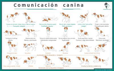 comunicacion_canina_posiciones corporales de los perros y su significado