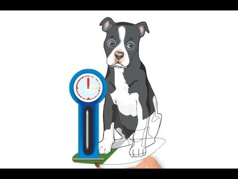 Як намалювати собаку, що сидить, як намалювати собаку крок за кроком, #d...