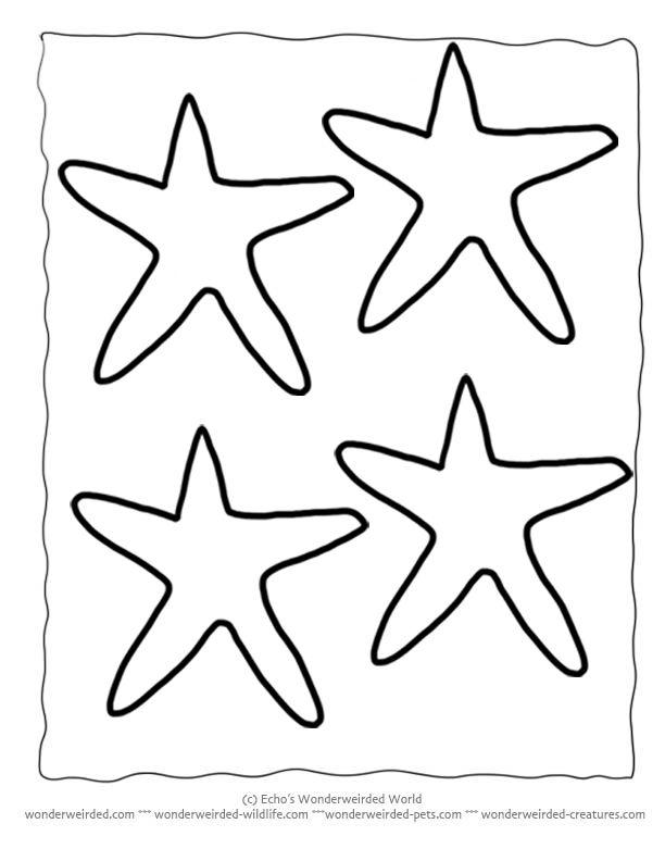 printable starfish template echos free starfish outline patterns at wwwwonderweirded wildlife