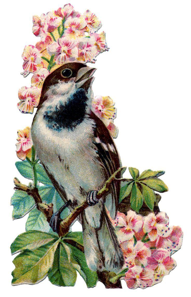 Птицы на открытках, анимированные сердечки