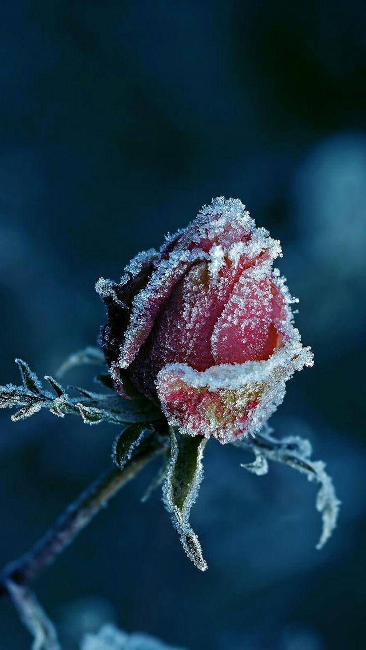 397 best winter garden images on pinterest winter garden frost