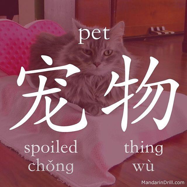 宠物 PET Haha that's hilarious. Share it to your friends! #pet #cat #rebus #chinese #china