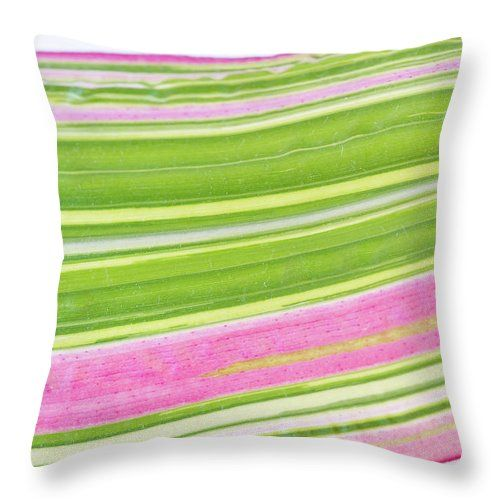 """Pillow with """"Natures Ribbon Macro"""" by Sandra Foster."""
