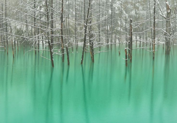 The green pond where snow falls by Kent Shiraishi on 500px