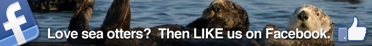 LIVE Sea Otter Cam : SEAOTTERS.COM – POWERED BY CUTENESS™
