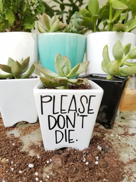 Do you literally love plants to death?! NO PROBLEM! This mini ceramic planter is perfect for the casual gardener or the seasoned horticulturist! Remind your plants that life is worth living with this funny planter!  Planter is ceramic with high quality vinyl, and measures 2 3/4 tall and 2 5/8 at the opening. The artwork on the planter was hand lettered, made digital, and cut into vinyl for a long lasting creation that will brighten everyones day!  The vinyl used is designed for outdoor use…