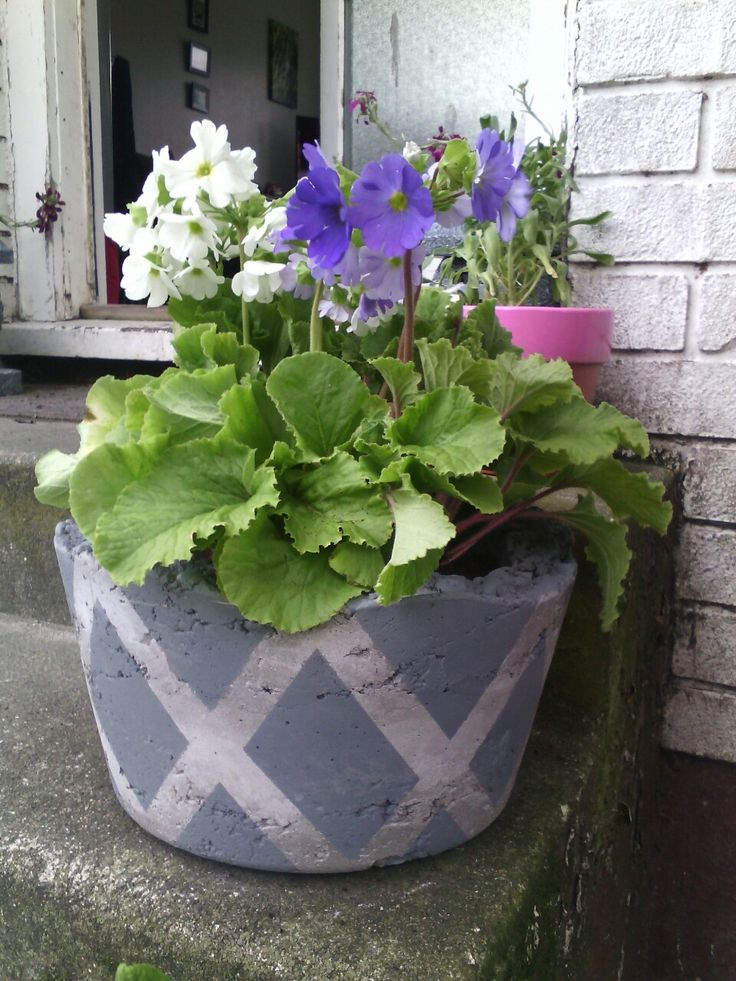 Concrete flower pot made by me last year.