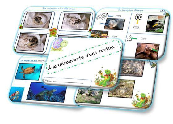 La tortue documentaire