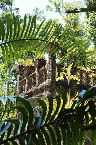 In the Jungle... at Paronella Park