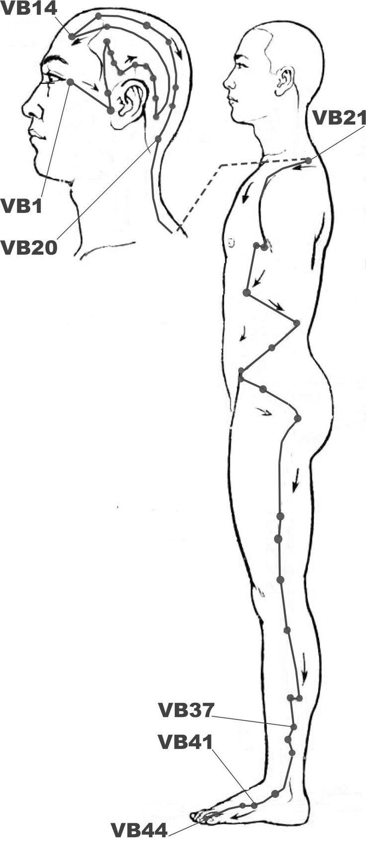 Méridien Vésicule Biliaire