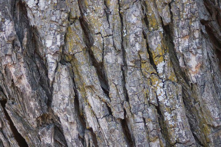 Bark and Moss -  textured nature. #Bark #Nature