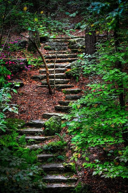 "Astonishing Photos of Paths in the Forest. ""True morality consists not in following the beaten track, but in finding the true path for ourselves, and fearlessly following it."" ― Mahatma Gandhi"