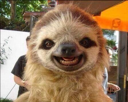 Laughing baby sloth <3