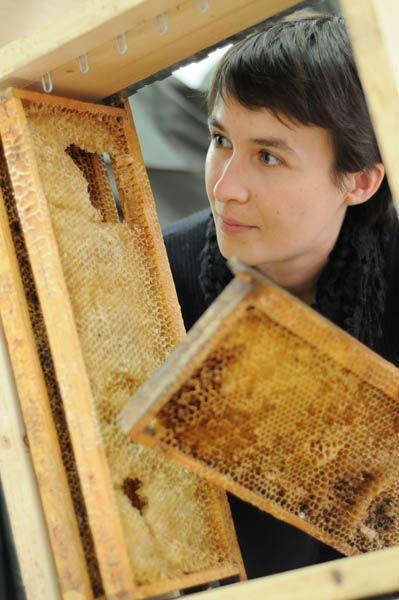 Secrets d'abeilles, une expo interactive à découvrir à Bellegarde du 7 au 19 oct !