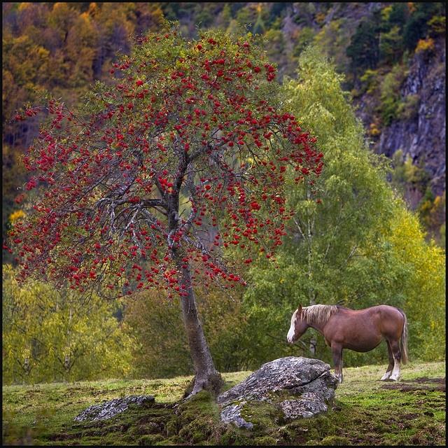 SAUTH DETH PISH, VALLE DE ARÁN, PIRINEOS - ESPAÑA Aran Valley, Pyrenees Spain