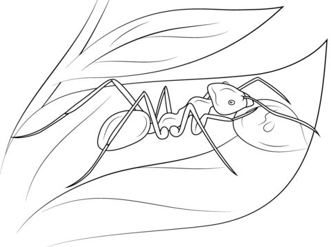 Meat Eater Ant Coloring Page