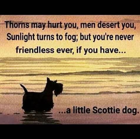 Little Scottie Dog