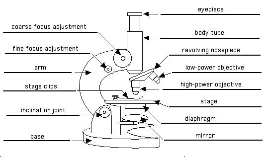 How To Use A Microscope