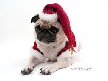 Perrito Santa Claus