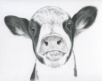 "Cow Portrait, Farmhouse Decor, ORIGINAL Cow Art, Charcoal Drawing , 11""×14"", Calf Artwork, Cow drawing, Cow sketch, Cow Decor, Farm Art"