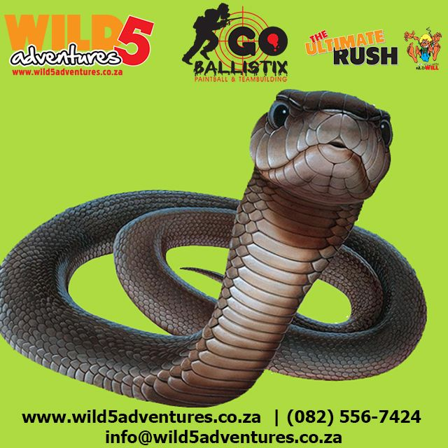 Did you know these Black mamba myths and facts? #Wild5PawPrint http://buff.ly/1G6Pc4z