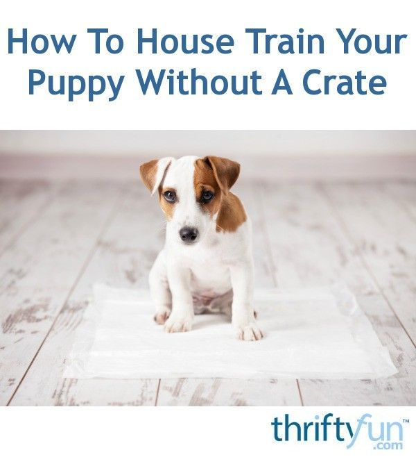 How To House Train Your Puppy Without A Crate Training Your