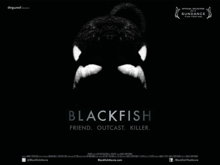 Blackfish Official Film Site - everyone should see this important documentary about Orca whales in captivity at Sea World