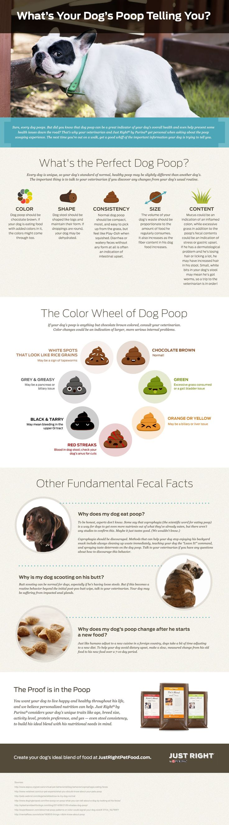Dog Poop & What It Means   Just Right by Purina