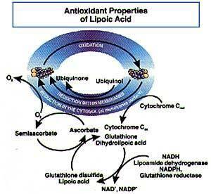 Artikel Kesehatan| Manfaat Kesehatan Alpha Lipoic Acid (ALA) antioksidan menghasilkan energi untuk tubuh . HWISEHAT HWI Jakarta Selatan