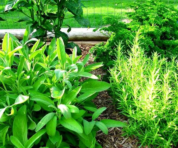 114 Best Images About Herb Garden On Pinterest | Raised Beds
