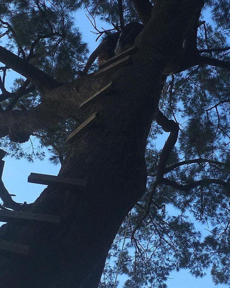 "10 Likes, 1 Comments - Anastasia Gryllis (@julietsvengeance) on Instagram: ""Climb 💪🏻 #climb #nepeanriver #penrith #tree #adventure"""