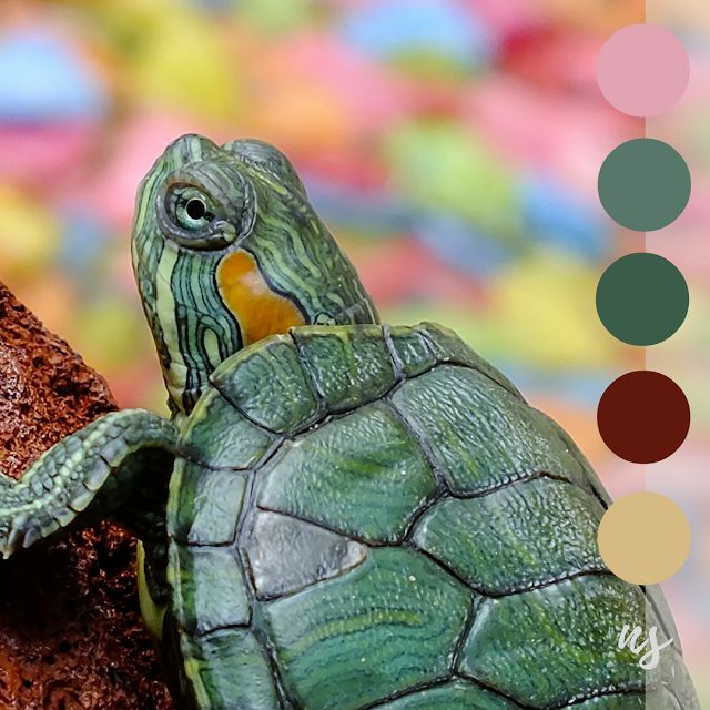 Terrapin Turtle - Nature Swatches