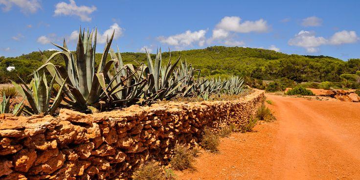 #Mediterrane #Landschaft von #Ibiza © Carina Dieringer/modelirium.at