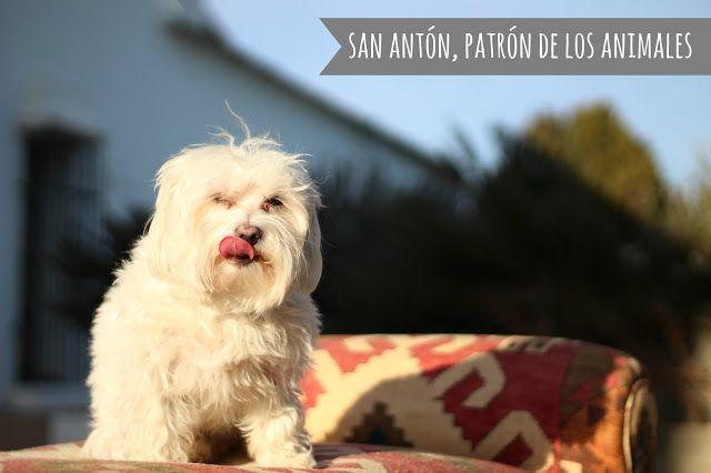 Con Perros y a lo loco | Vida perruna | Dogs & Lifestyle: San Antón, patrón de los animales