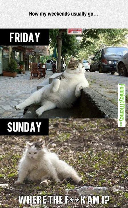 Funny Pictures How My Weekends Usually Go...