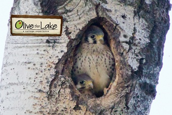 Very cool photography at Olive the Lake fishing lodge - http://www.olivethelake.com
