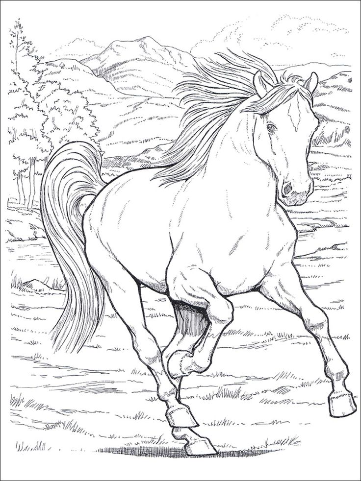 horses_2 Adult coloring pages