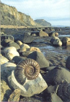 This is Charmouth beach. My friend went here and found lots of fossils. I'd like to go and do the same because there's something special about finding that link to the past.
