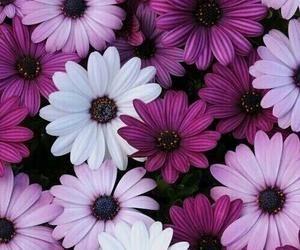 #purpleflowers