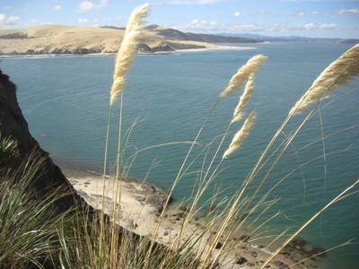 26 best images about hokianga on pinterest an adventure