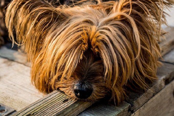 J'ai un petit chien, trop mignon. Mais le pauvre a mauvaise haleine.  Découvrez l'astuce ici : http://www.comment-economiser.fr/mon-chien-a-mauvaise-haleine-que-faire.html
