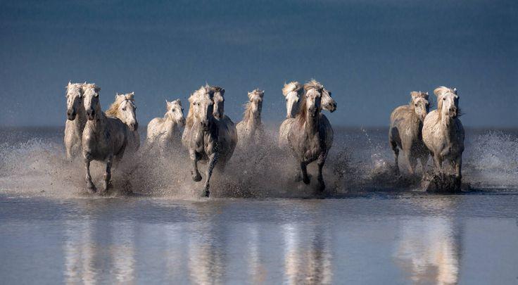 tilestwra.gr : Λευκά άλογα φωτογραφίζονται να τρέχουν στη θάλασσα! Η αίσθηση της ελευθερίας στο αποκορύφωμά της…