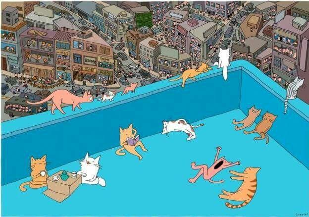 gatti in terrazza