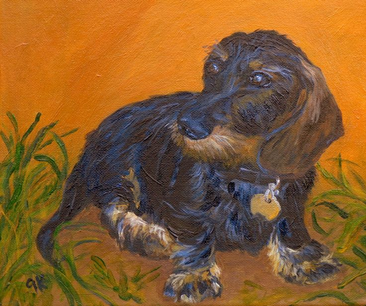 Beppo: one cute Wiener puppy
