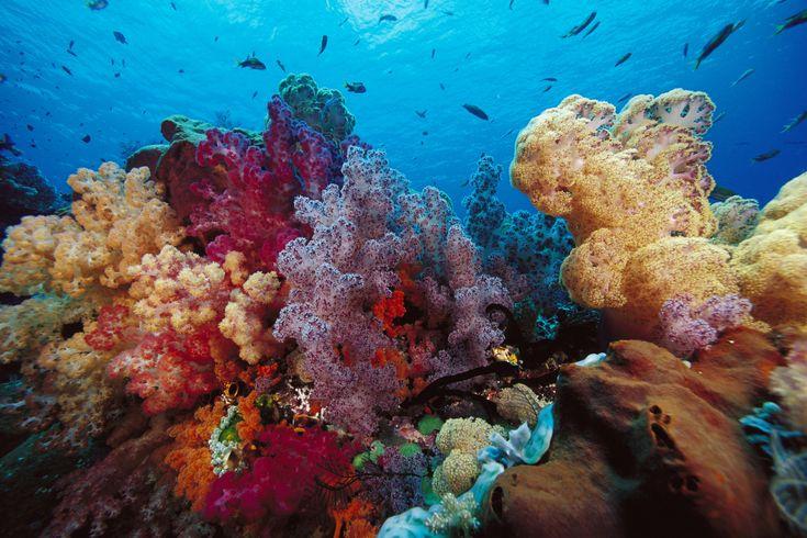 Afbeeldingsresultaat voor koraal