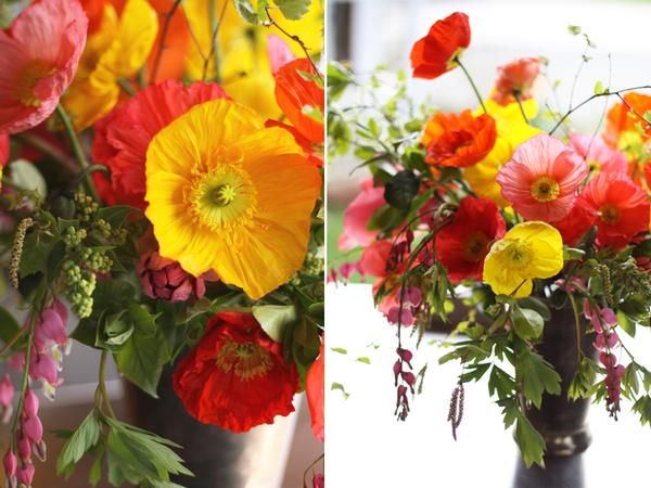 poppies are a fun california thing. my mom loves them.