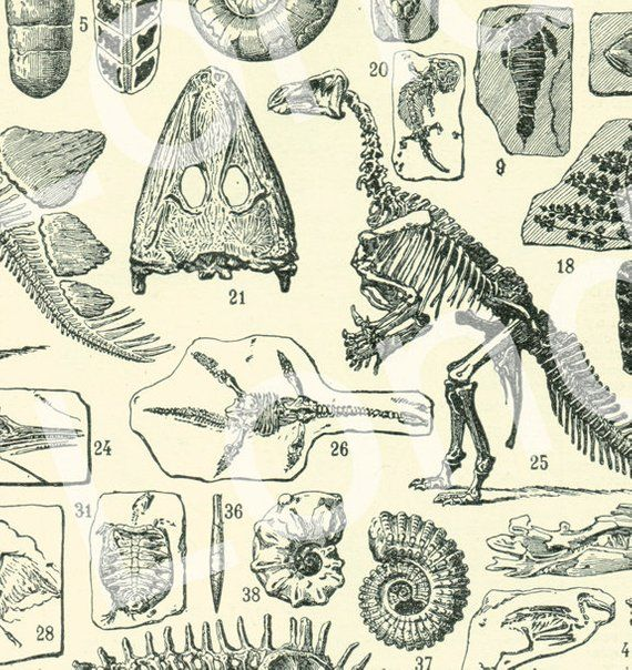 Vintage Poster Print Dinosaur Skeleton Muscle System Science Home Wall Art Decor